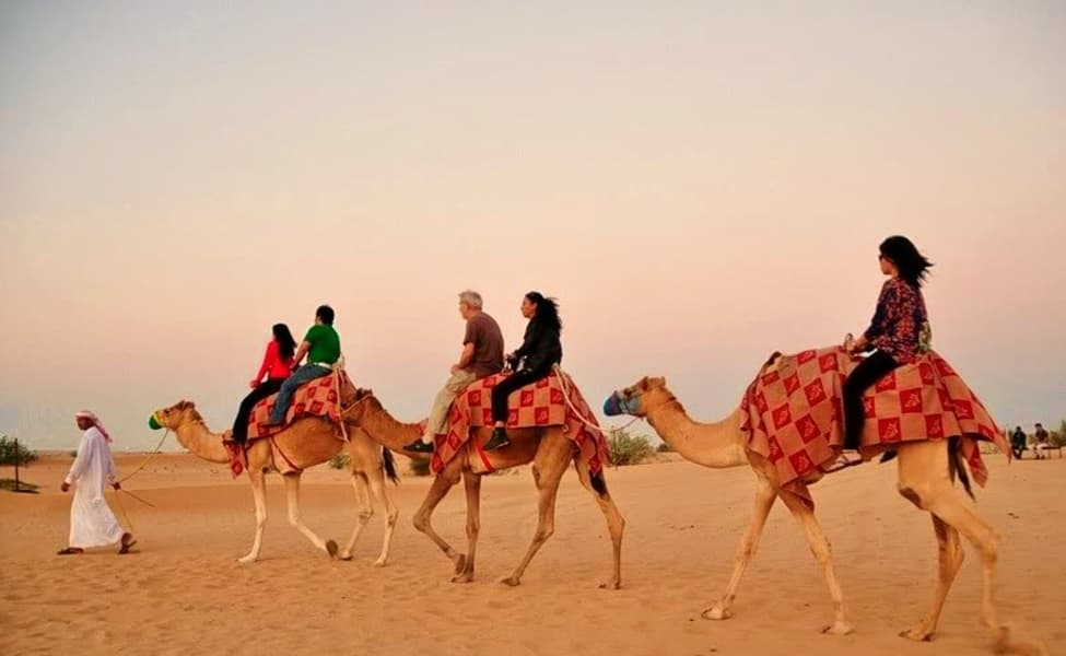 Camel Ride In Dubai