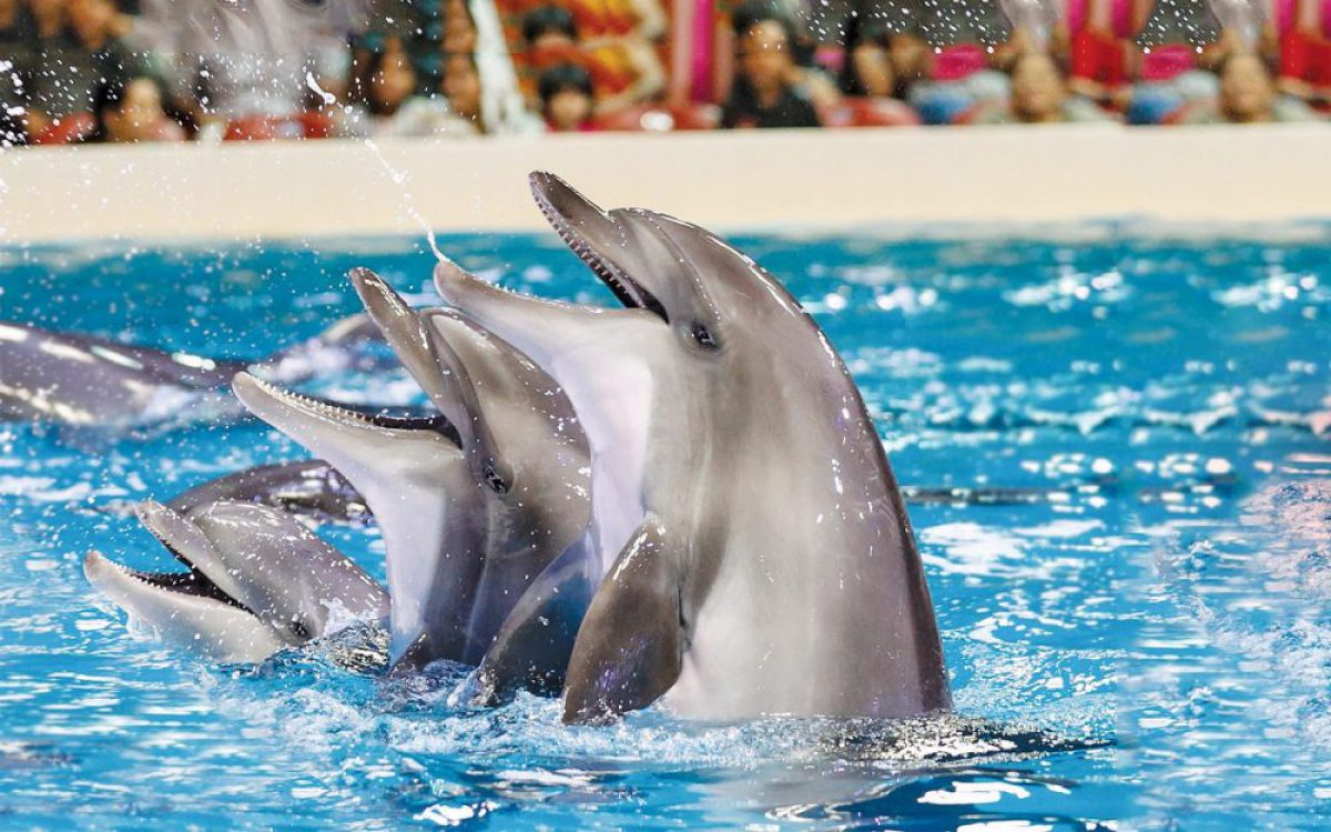 Dolphinarium at the Dubai Creek Park